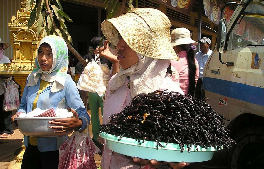 kambodscha-backpacker-essen-spinnen