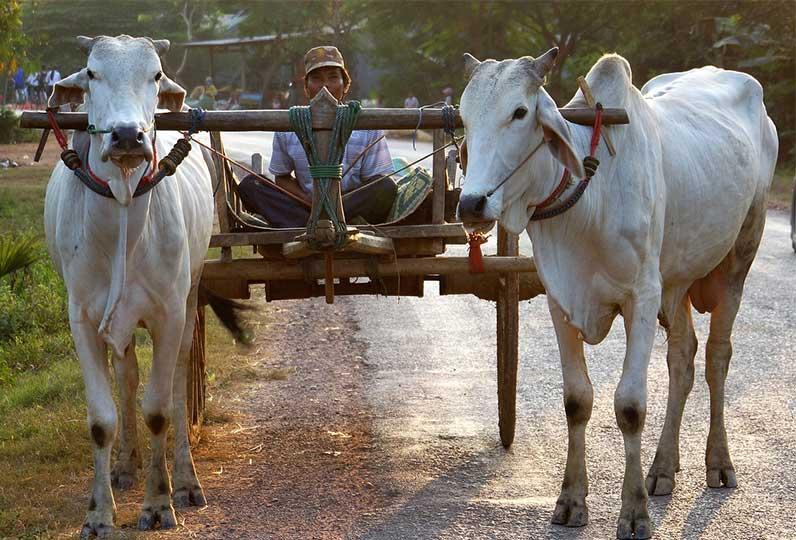 kambodscha-backpacker-transport